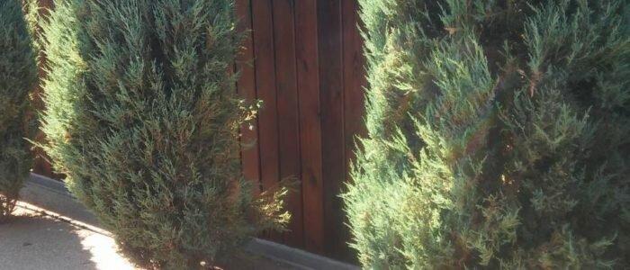 Деревянный забор из сосны